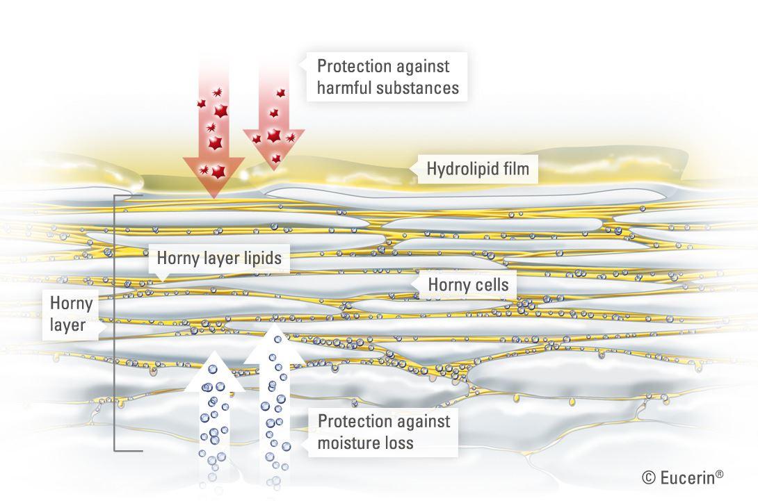 Cấu trúc da: bên trong lớp sừng